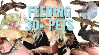FEEDING ALL OF MY PETS! | Routine For 30+ Pets