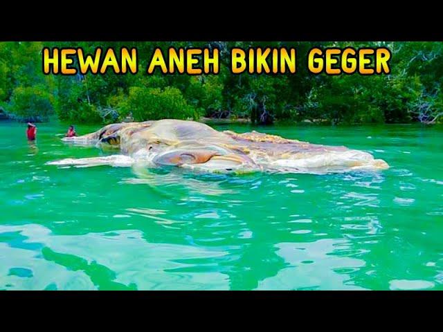 10 Kemunculan Hewan Aneh Yang Menghebohkan Indonesia