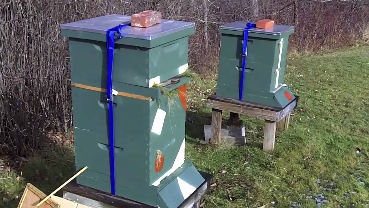 nucs overwintering on top of 20 frame colony youtube