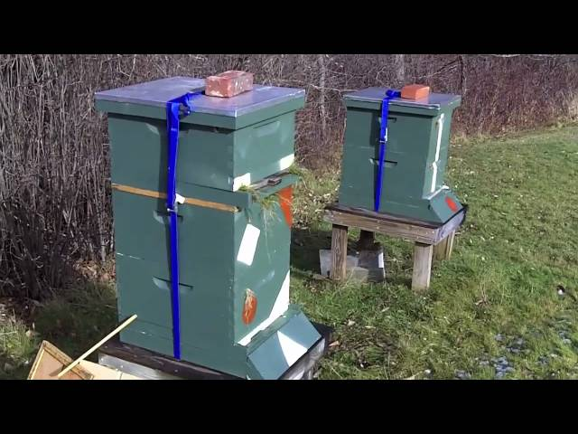 Nucs overwintering on top of 20 frame colony