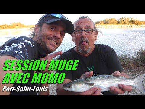 Session Muge (Mulet) à Port-Saint-Louis avec Momo (Team MICH PÊCHE)