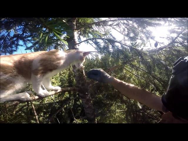 Estos dos hombres utilizan sus horas de descanso para rescatar a gatitos de los árboles