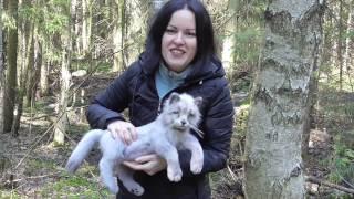 Серый кот Филл
