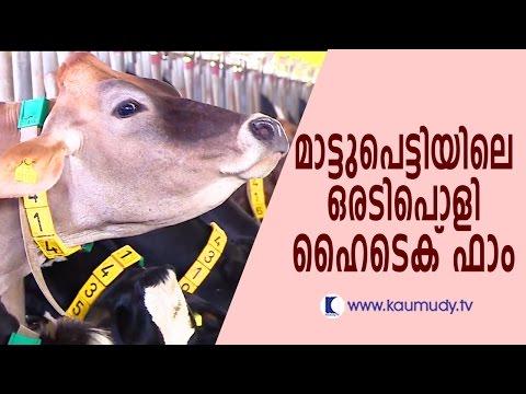 A High Tech Farm in Mattupetty | Haritham Sundaram  | Kaumudy TV