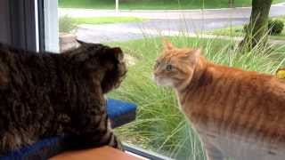 Cat fight through the window.