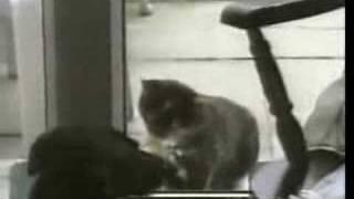funny cat kuso video貓咪爆笑趣味影片