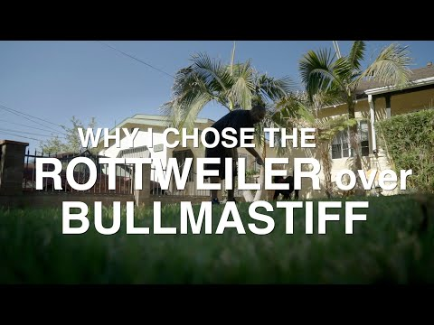 WHY I CHOSE THE ROTTWEILER OVER THE BULLMASTIFF