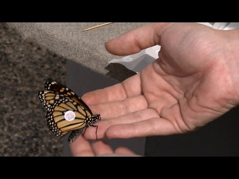 Monarch Butterfly Tagging - Family Plot