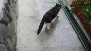 Собака плачет, что кот ушел.