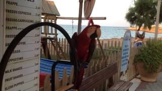 Танцующие попугаи!(, 2014-09-30T06:36:56.000Z)