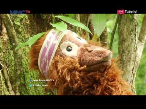 Motif Keren Bunglon Gunung  - Jejak Rimba (25/3)