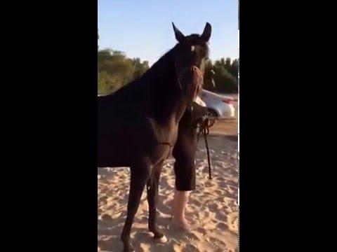 فتاة مع حصان VID 20160503 WA0000
