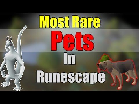 5 Rarest Pets In Old School Runescape