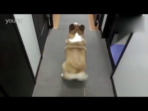 Cute Dog Shake Its Ass with Music