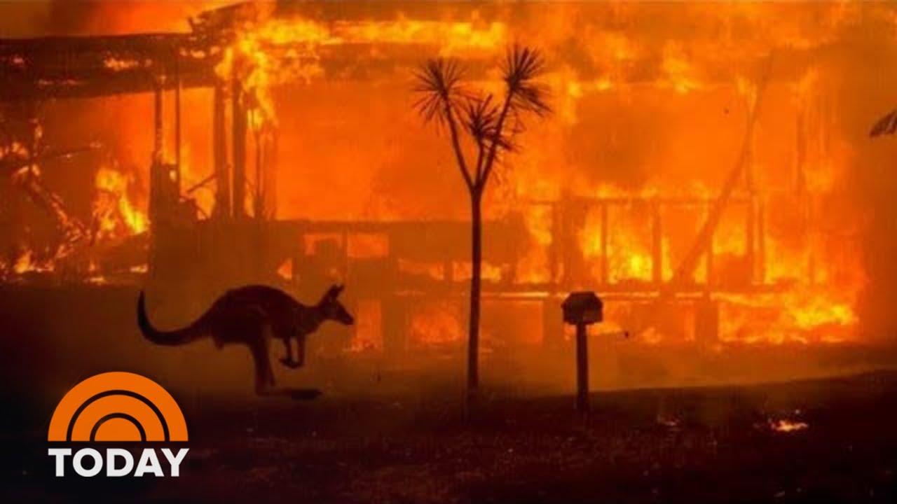 """ผลการค้นหารูปภาพสำหรับ bushfire australia koala and kangaroo"""""""