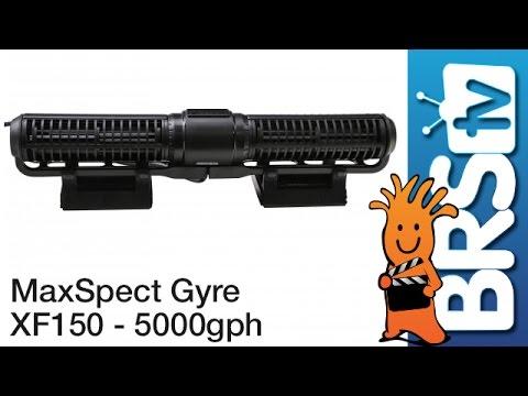 maxspect gyre xf150 flow dynamics brstestlab youtube