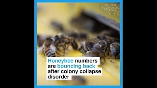 Honeybee numbers are bouncing back after colony collapse disorder thumbnail