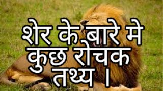 Lion facts in hindi