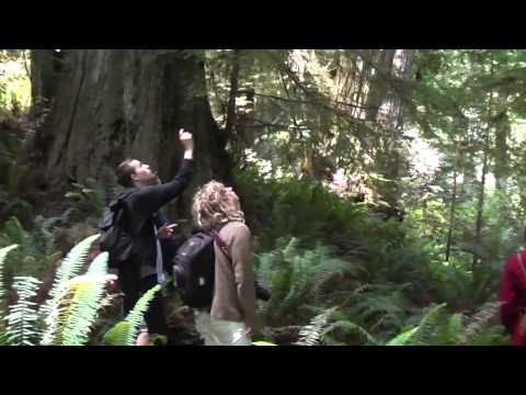 In search of secret giant redwoods