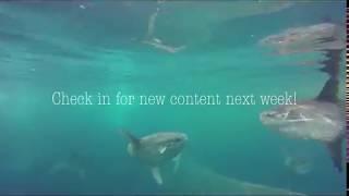 Ep 1: Ocean sunfish - Under the skin!