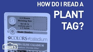How Do I Read a Plant Tag? | DIY Basics