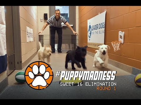 2018-puppy-madness-//-sweet-16-elimination-:-round-one-(puppies-playing-basketball)