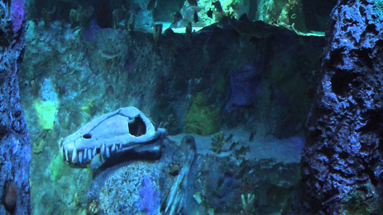 sea life grapevine aquarium youtube. Black Bedroom Furniture Sets. Home Design Ideas