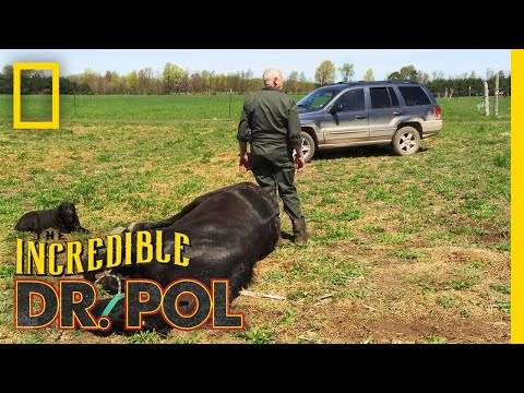 A Big Horse Means Big Pain  The Incredible Dr Pol