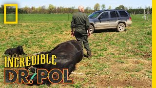 A Big Horse Means Big Pain | The Incredible Dr. Pol