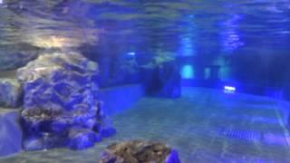 すみだ水族館のペンギンです。 ペンギンってこんなに早く泳げるんですね...