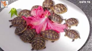 Funny And Cute Animals Videos Compilation 2016 HD 1
