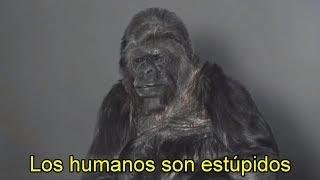 Este Gorila Habló y NO Creerás el Mensaje que Reveló thumbnail