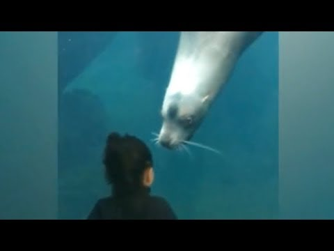 KIDS visit WATER ANIMALS at ZOO! - Best REACTIONS ever :)
