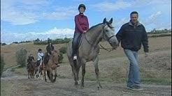 Journée du cheval au centre Hippo'these (Montgiscard)