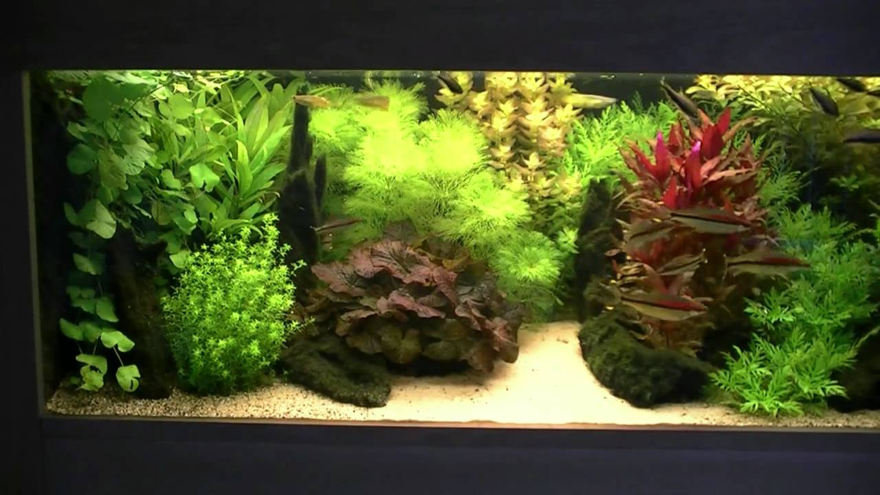 Dutch Style Aquarium Fish Tank Youtube