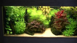 Dutch style aquarium / fish tank