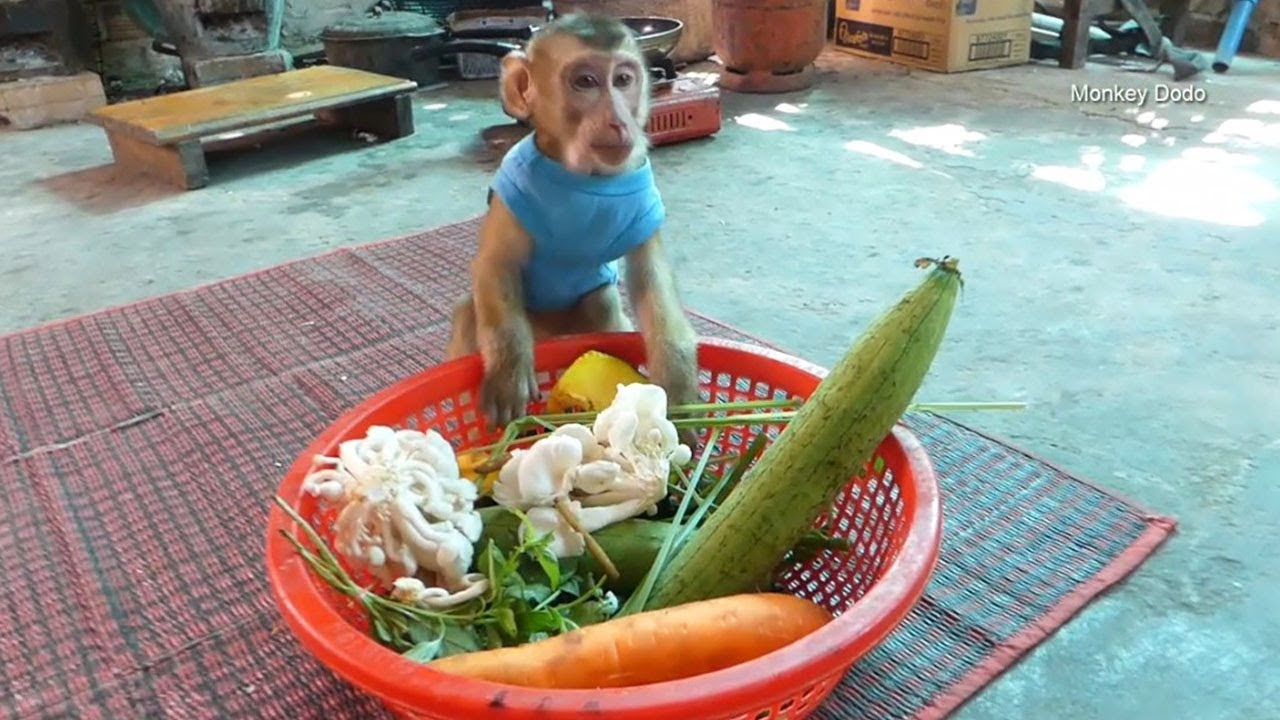 Monkey Baby , Dodo Prepare Veggies Wait Mommy Cook