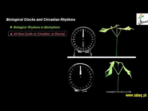 Biological Clocks and Circadian Rhythms