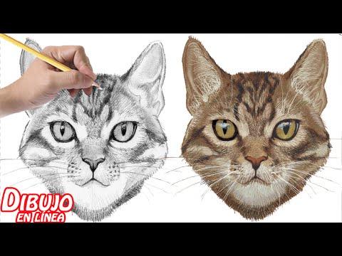 Como Dibujar Un Gato Explicado Youtube