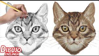 como dibujar un gato  (explicado)