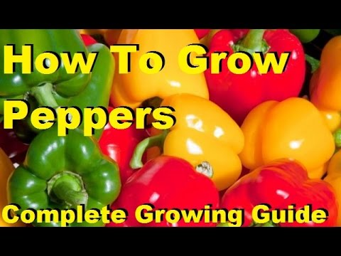how-to-grow-peppers---complete-growing-guide