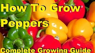 How To Grow Peppers - Complete Growing Guide