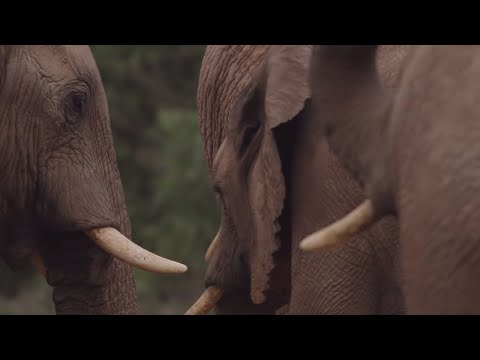 South Africa's Strongest Animals | Wild Lands: South Africa | BBC Earth
