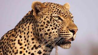 Süd-Afrika - Die vergessensten Tiere der Welt - Doku 2017