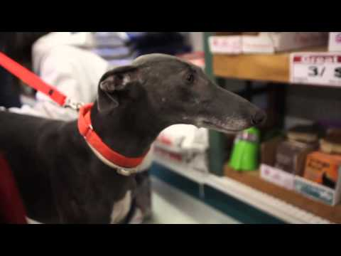 "Greyhounds ""Furever"" with Money & Tejas -- Life in the Dog House Ep. 16"