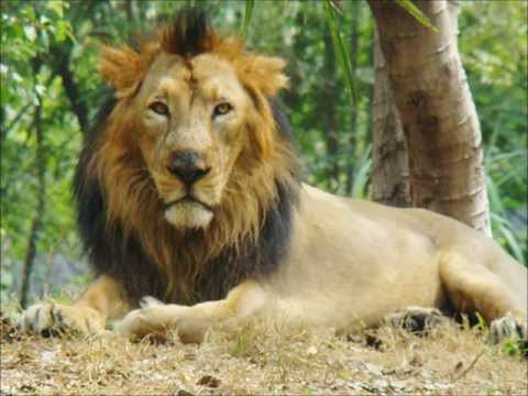 Top 5 Big Cats In Asia