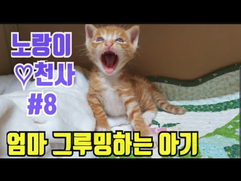 《길고양이 노랑이와 천사 이야기 #8》엄마 그루밍 해주는 아기고양이,  kitten, 아기고양이, 새끼고양이, 고양이 유튜버