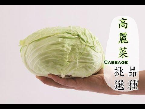 【冬】高麗菜正便宜,如何挑選才好吃