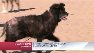 В Новом Уренгое собака провела в бетонном туалете 8 лет