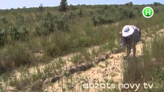 видео Где хорошо и недорого отдыхать в Украине